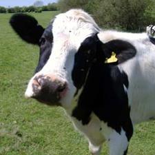 Dairy Farm Treatment Systems